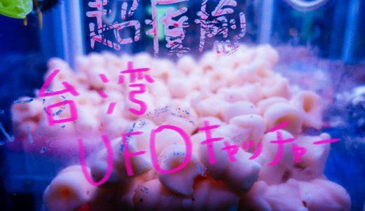 【UFOキャッチャー】台湾のあやしいキャラクター「小丁丁」をゲットする方法