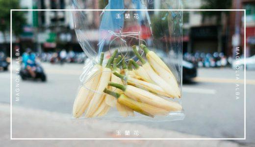 道端の花売りさんから「玉蘭花」を買ってホテルの部屋をいい香りにしよう!